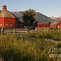 Red Farm by John Shaw