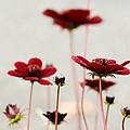 Red by Gunay Turgut