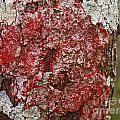 Red Lichen  by Howard Stapleton