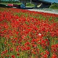Red Poppy Field Near Highway Road by Alex Grichenko