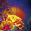 Red Yellow Blossoms 10197 by Jerry Sodorff