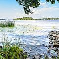 Reeds And Dnieper River by Alain De Maximy