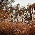 Reeds Highlighted By The Sun by Artur Bogacki