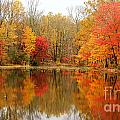 Reflections Of Fall by Traci Law