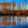 Reflections by Robert Mullen