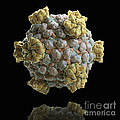 Reovirus Core by Science Picture Co