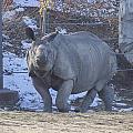Rhino by Becca Buecher
