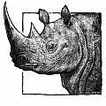 Rhino by Chris Van Es
