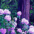 Rhododendron  by Pamela Cooper