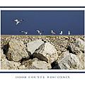 Ring-billed Gulls by Barbara Smith