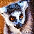 Ring Tailed Lemur by George Atsametakis