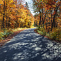 Road In Fall Forest by Elena Elisseeva