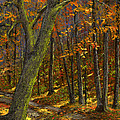 Road In The Woods by Frank Wilson