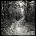 Road Way In Deep Forest by Setsiri Silapasuwanchai