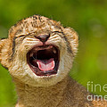 Roaring Practice by Ashley Vincent