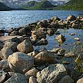 Rocky Shoreline In Acadia National Park by Randall Nyhof