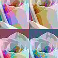 Rose Four by Linda Dunn