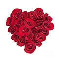 Rose Heart by Elena Elisseeva