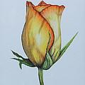 Rosebud by Karen Beasley
