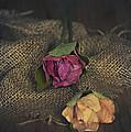 Roses by Svetlana Sewell