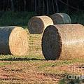 Round Hay Bales by J McCombie