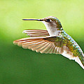 Ruby-throated Hummingbird by Jaron Wood