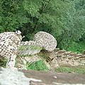 Rud-khan Castle by Floria Varnoos