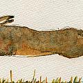 Running hare by Juan  Bosco