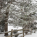 Rural Winter Scene With Fence by Elena Elisseeva