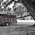 Rusty Horse Trailer Under The Live Oak by Scott Hansen