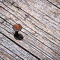 Rusty Nail In An Old Wooden Board by Jozef Jankola