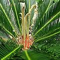 Sago Palm by Zina Stromberg