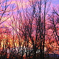 Red Sky In Morning by Samantha Storment