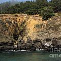 Salt Point Cliffs by Suzanne Luft
