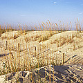 Sand Dunes On The Beach, Anastasia by Panoramic Images