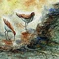 Sand Pipers by Steven Schultz