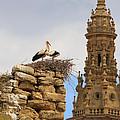 Santo Domingo De La Calzada by Louise Heusinkveld