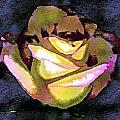 Scanned Rose Water Color Digital Photogram by Paul Shefferly