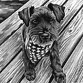 Schnauzer Black Dog by Robyn Saunders