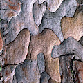 Scots Pine Bark Abstract by Nigel Downer