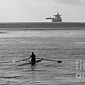 Sculling On The Bay by B Christopher