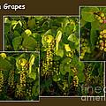 Sea Grapes by Nancy L Marshall