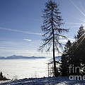 Sea Of Fog Over An Alpine Lake by Mats Silvan
