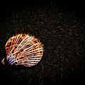 Sea Shell by Steve McKinzie
