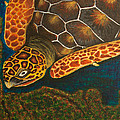 Sea Turtle by Susan Cliett