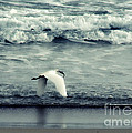 Seagull  by Stelios Kleanthous