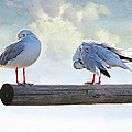 Seagulls by Heike Hultsch