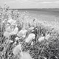 Seaside Grass by Les Cunliffe