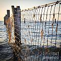 Seaside Nets by Tim Hester
