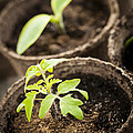 Seedlings  by Elena Elisseeva